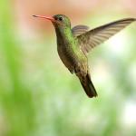 Das Kolibri-Update