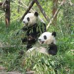 Das Panda-Update
