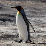 Das Pinguin-Update