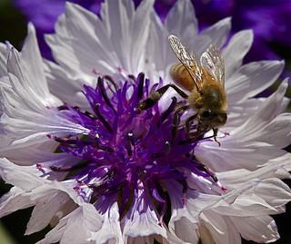 More than Honey -Weltweites Bienensterben
