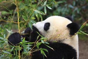 Keine Angst vorm Panda-Update